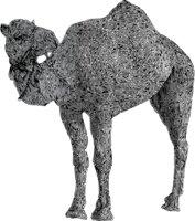 Camel Doodle